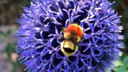 Bee_App