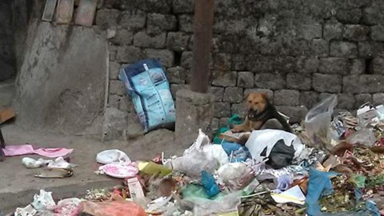 Piles of garbage in darjeeling