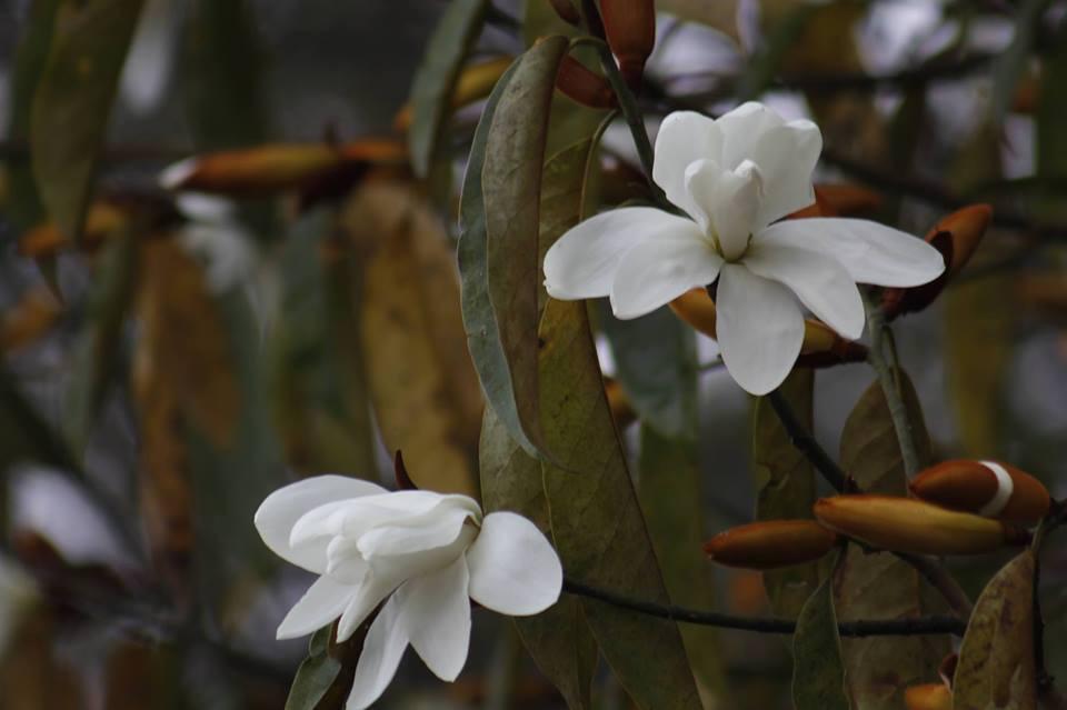 Darjeeling-spring-pictures