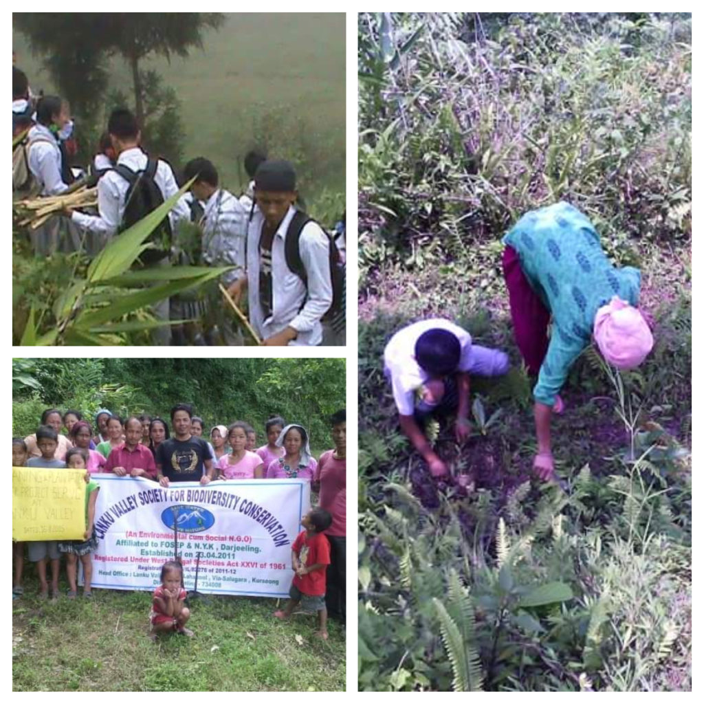 Biodiversity awareness programs and plantation activities
