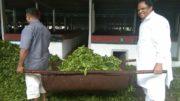 John Barla at Lakhra Tea Estate