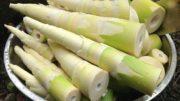 Bamboo Shoot ताँबा